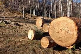 Urmează să fie instituit un moratoriu de 3 ani la tăierea pădurilor din Moldova