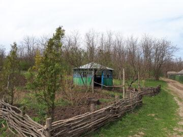 Reorganizarea silviculturii în raionul Cahul