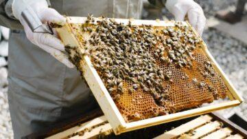 Au beneficiat de granturi și au primit stupi cu albine din partea OIM: istoria a 15 șomeri din Cantemir