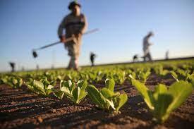 """ONG-ul """"Forța Fermierilor"""" se va crea la inițiativa unor agricultori din 10 raioane ale țării"""