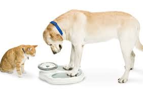 Do the scales say you need to go on a diet?