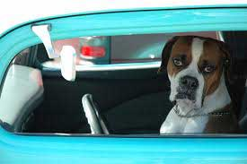 Don't leave your dog unattended in a car