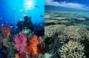 Great Barrier Reef Coral Bleaching before and after