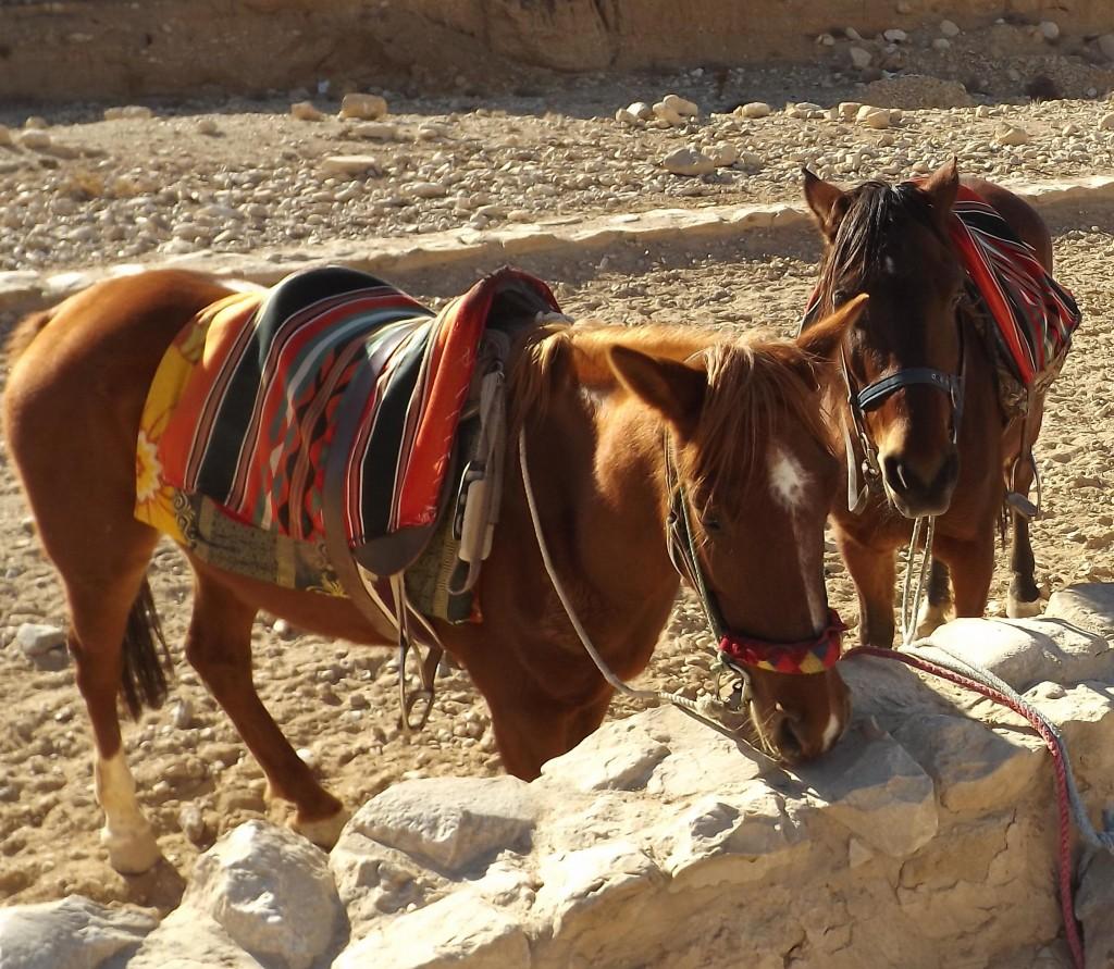 Horses at Petra (Copyright Carole French)