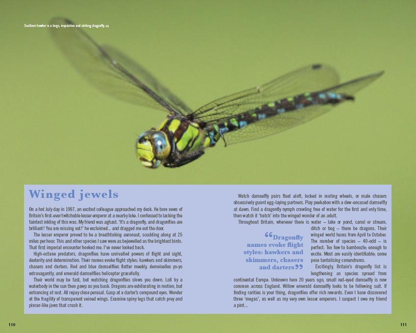 ASOBW Lowen dragonflies