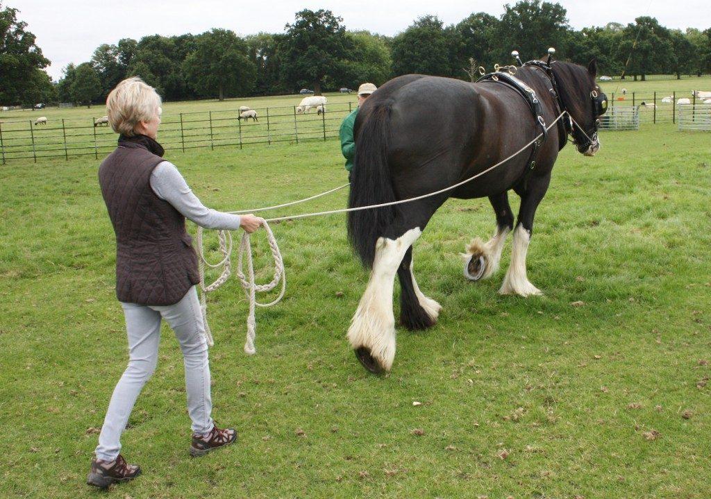 horse-C-1024x719
