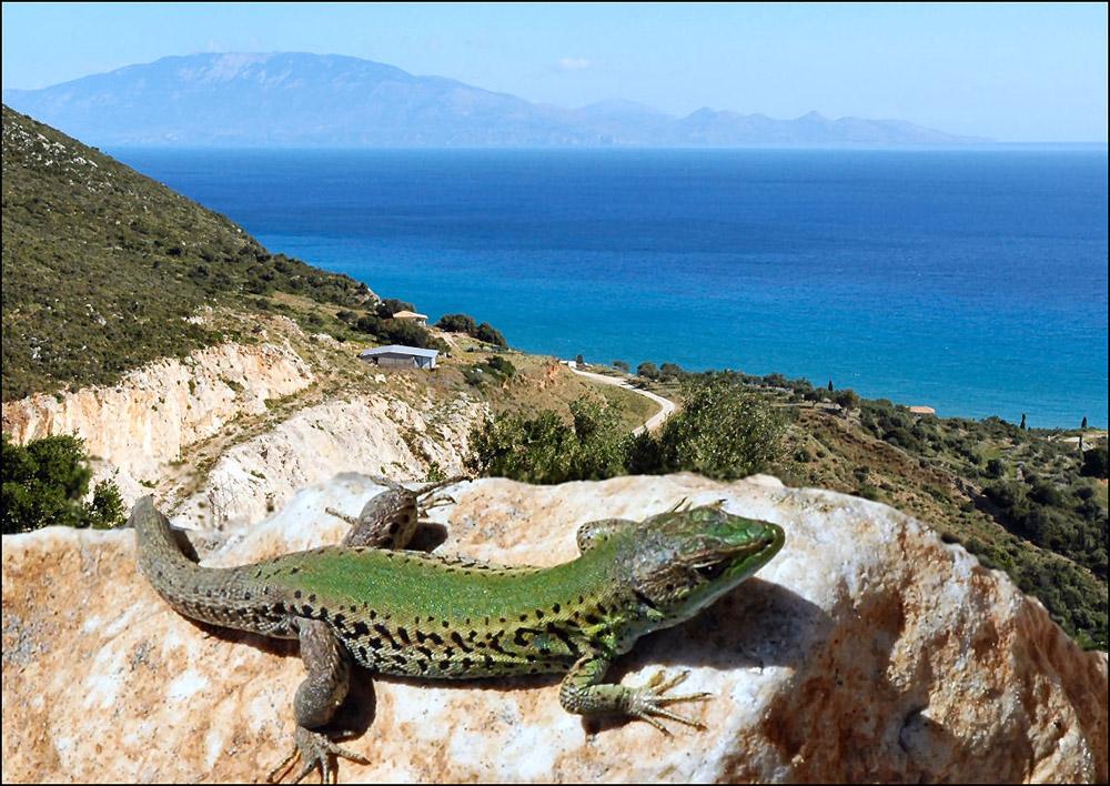 Lizard by Allan Rogers.
