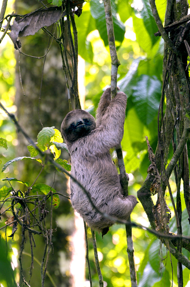 Sloth by Jeremy Hoare.