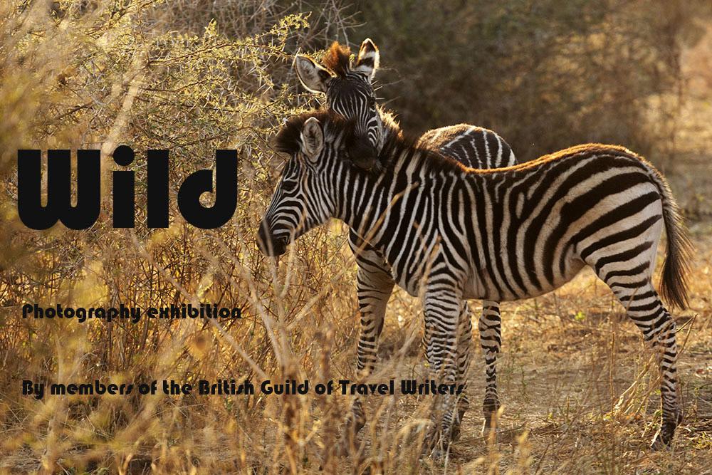 Zebras in Victoria Falls National Park in Zimbabwe