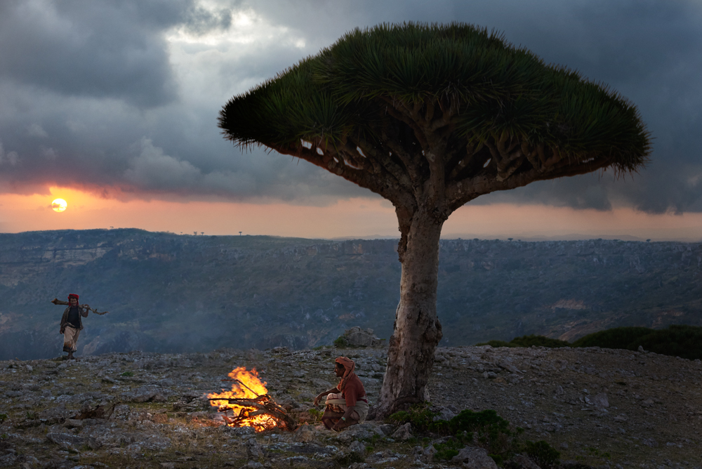 Bedouin under a dragon's blood trees on Socotra by Simon Urwin