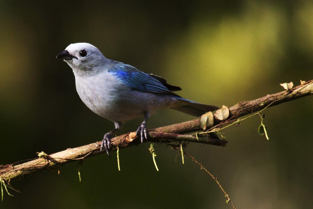 A bird in Costa Rica