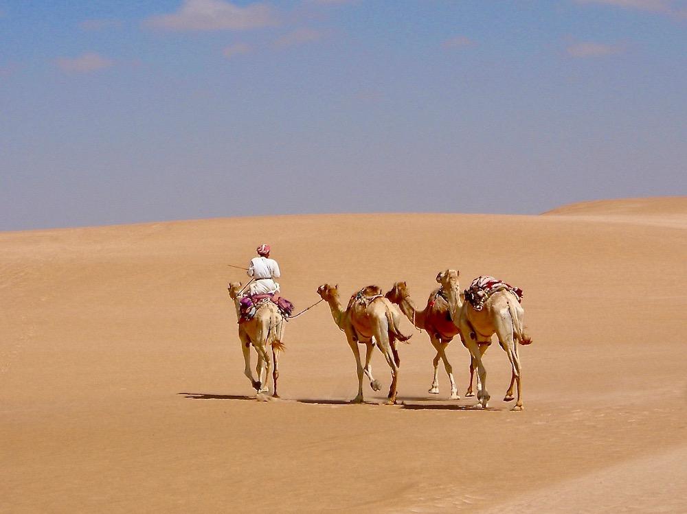 Camels crossing Oman's Wahiba Sands by Richard Villar.