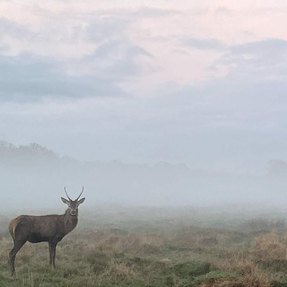 Sarah Tucker's photo of a stag