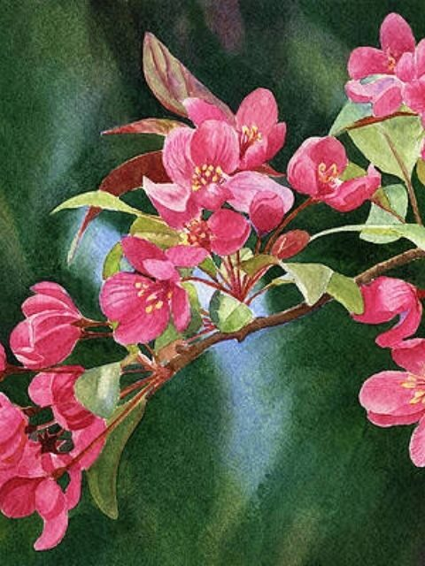 Branch of Coral Colored Blossoms with Dark Background Print by Sharon Freeman