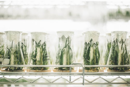 BENEFICIAL BACTERIA VERSATILE WEAPONS AGAINST PLANT PATHOGENS