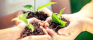 Planting new trees equals biomass
