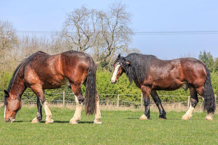 STORM AND MAX horses