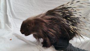 porcupine puppet maker