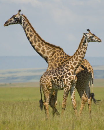 Get Adrenaline Rush or See the majestic Wild Animals