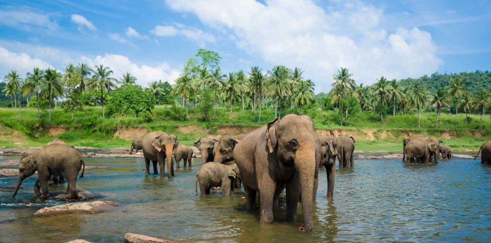 sri lanka itinerary customized holiday on budget