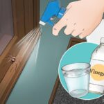 Never see a spider again