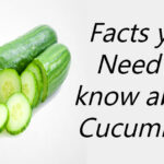 Facts you need to know about Cucumbers