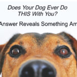 Does Your Dog Ever Do THIS With You?