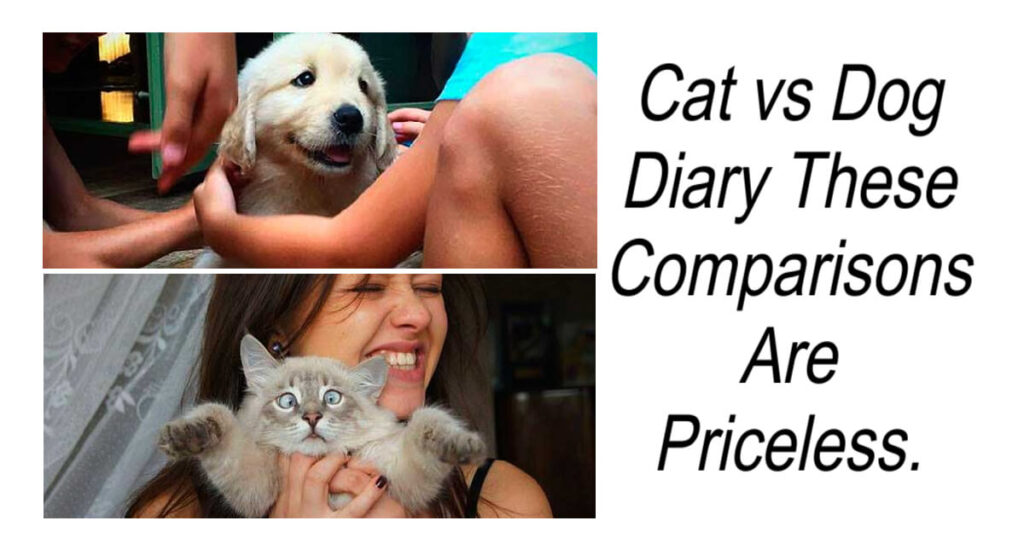 Cat vs Dog Diary These Comparisons Are Priceless