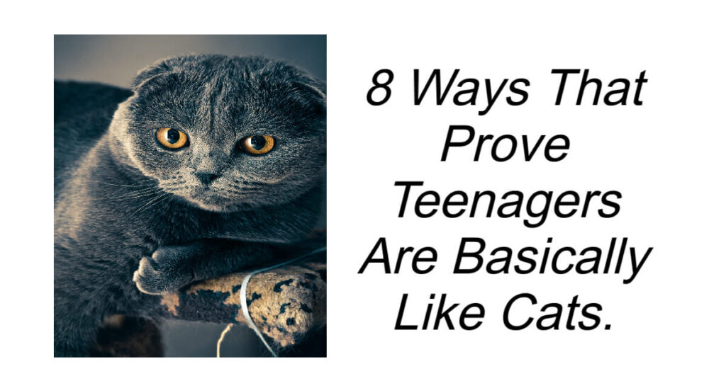 8 Ways That Prove Teenagers Are Basically Like Cats