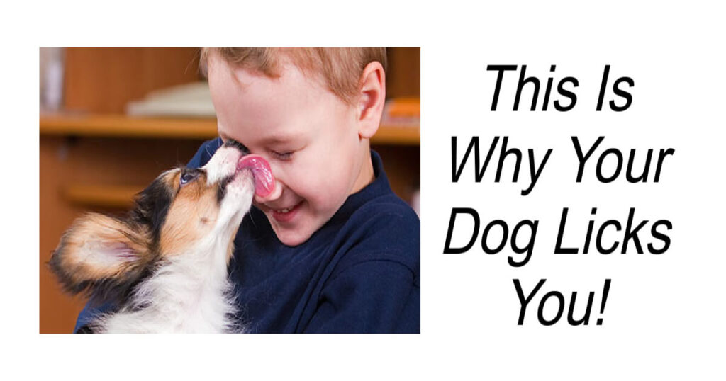 This Is Why Your Dog Licks Your Face