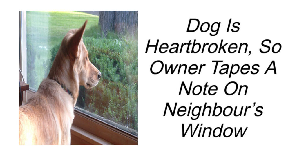 Heartbroken Dog Until Owner Tapes A Note On Neighbours Window