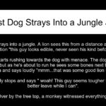 A Lost Dog Strays Into a Jungle Joke.