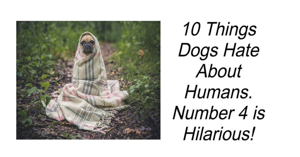Things Dogs Hate About Humans