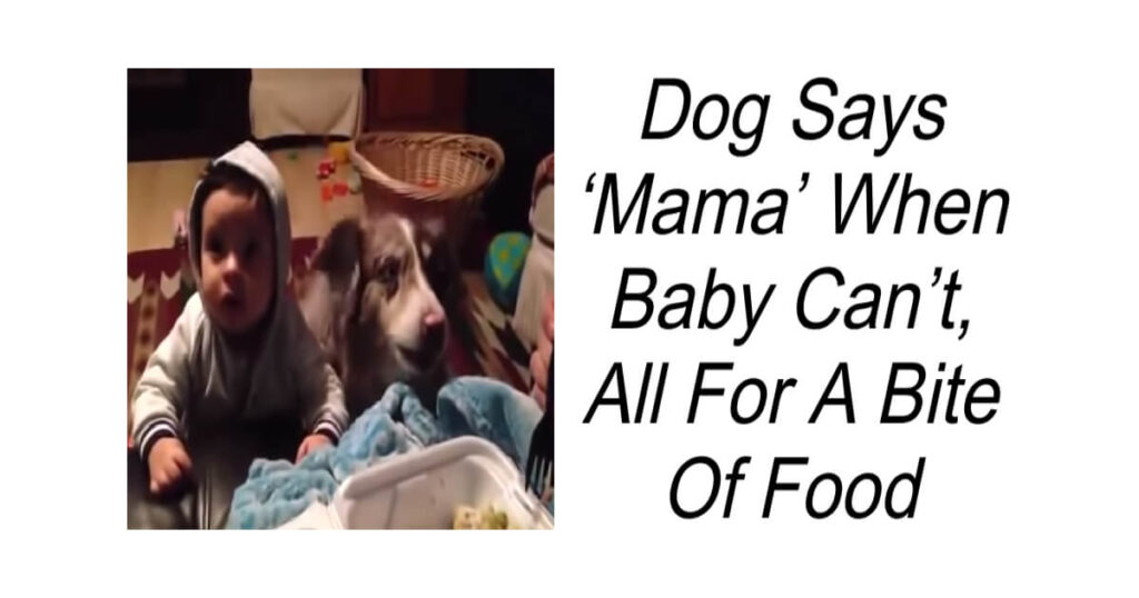 Dog Says Mama When Baby Can't