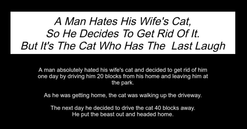 Man Hates His Wife's Cat