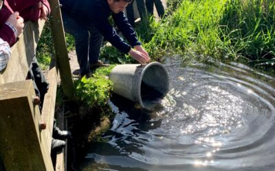 Great excitement with the annual release of the trout from Berkshire Trout Fisheries for our Fishing Club on the River Pang which runs through the School grounds. 3B were delighted to be able to help during their 'science' lesson – what a country prep school education is all about.  Tight lines!
