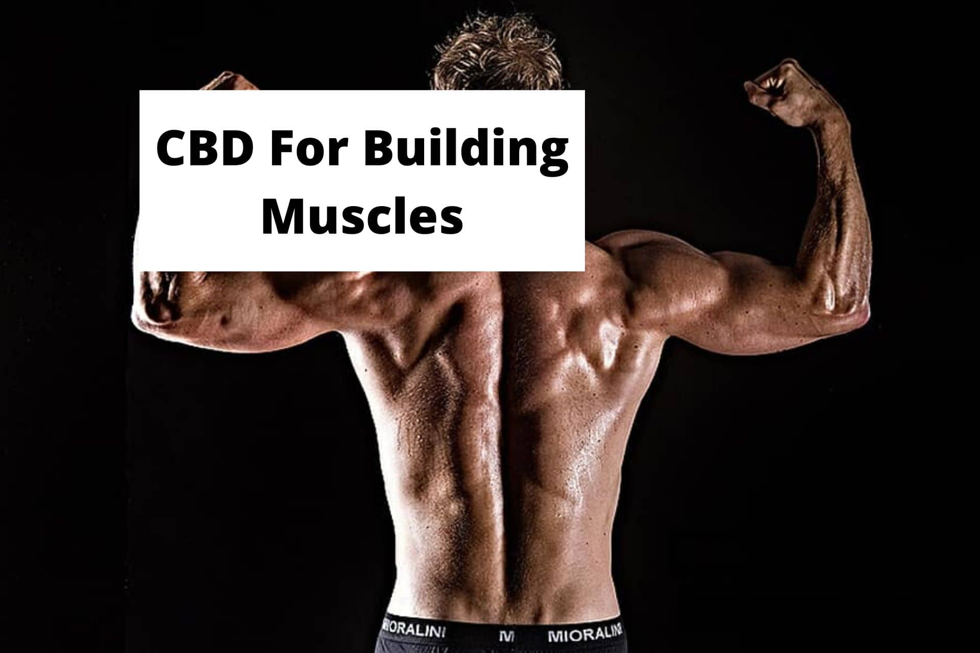 CBD For Building Muscles