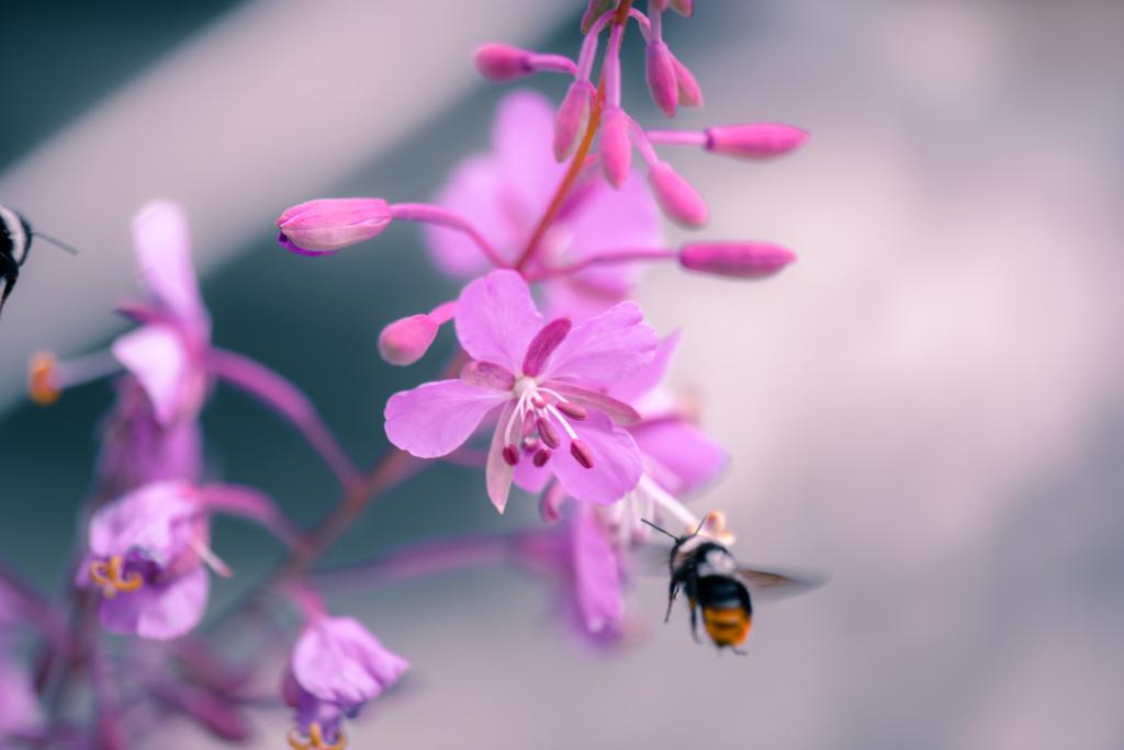 Buzzing In