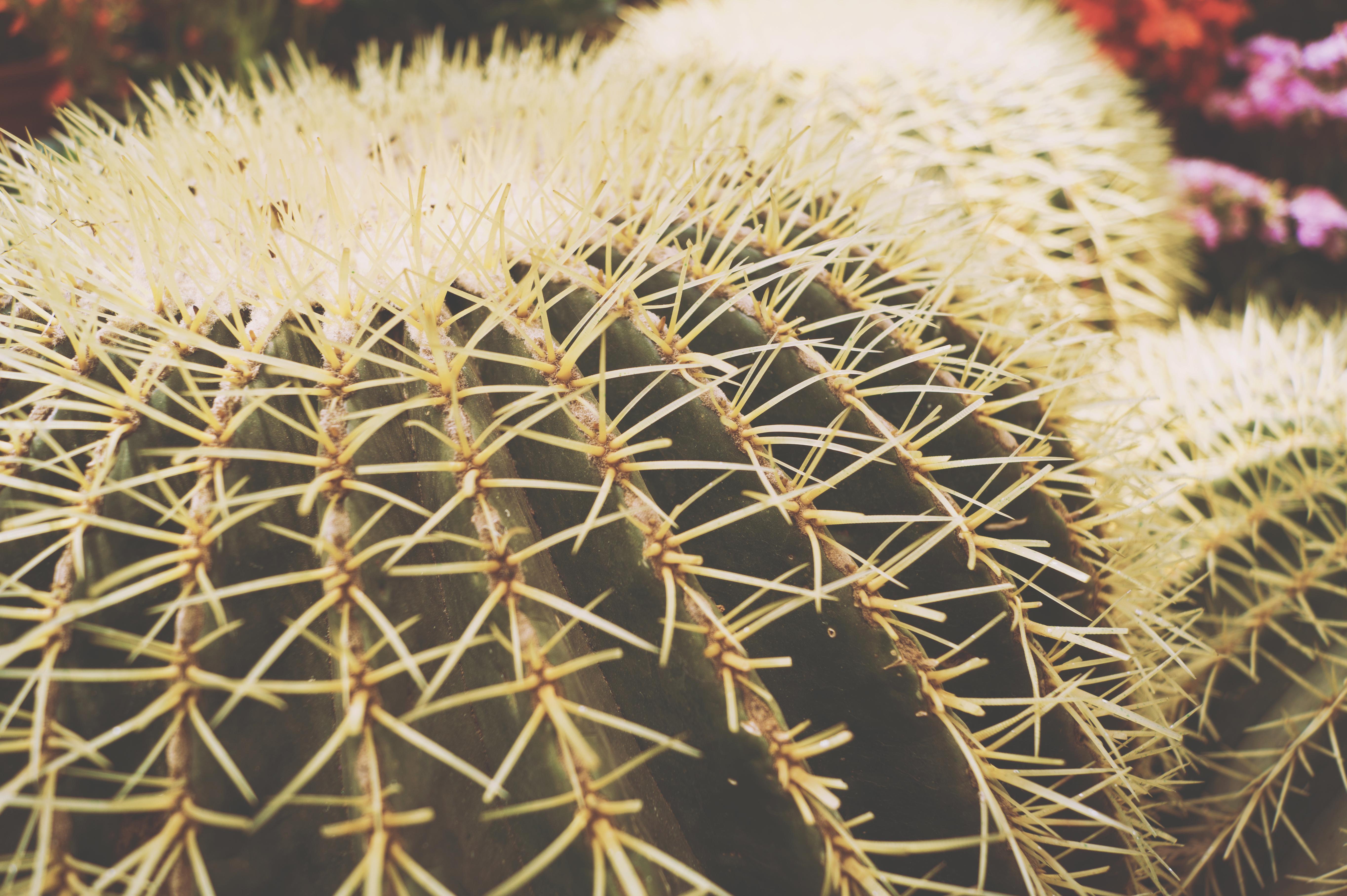 Close Up Shot Of Cactus