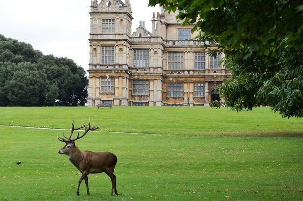 deer on the green grass