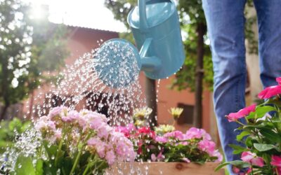 How to Keep Your Garden Healthy in Summer