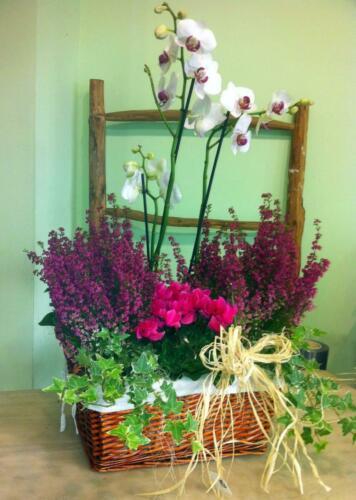 Centro flores plantas