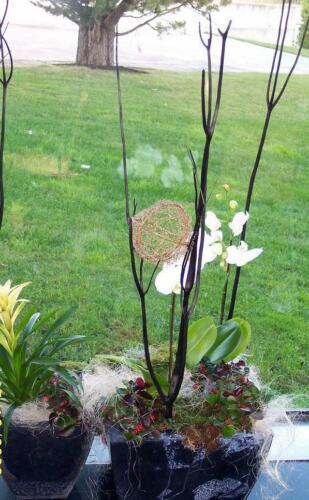 Plantas con complementos