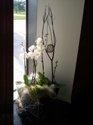 Plantas decoración hogar