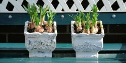 Start planting your summer bulbs