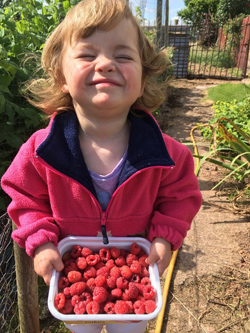 A tub full of raspberries and a very happy Willow