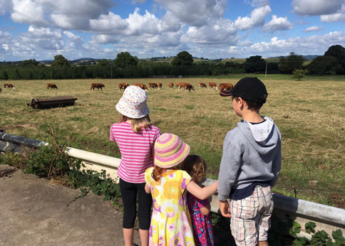 Willow with her cousins on our family farm holiday