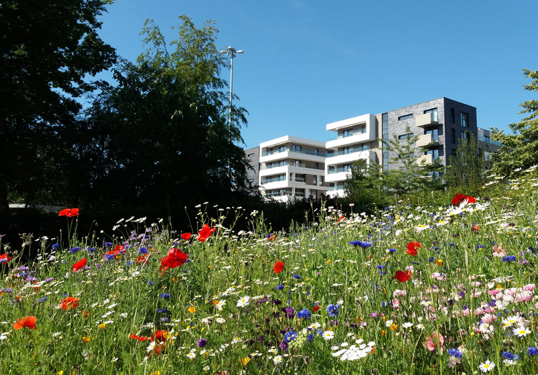 Green open spaces within 2.5km of every home
