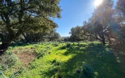 Olbia | Telti | Terreno agricolo