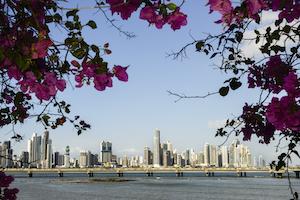 Panama city skyline framed by bougainvillea flowers